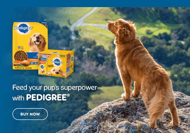 Dog on cliff feed your pup's superpower