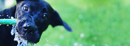 Keeping Your Canine Cool This Summer
