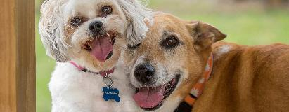 Getting An Adult Dog To Be Socialized With Humans