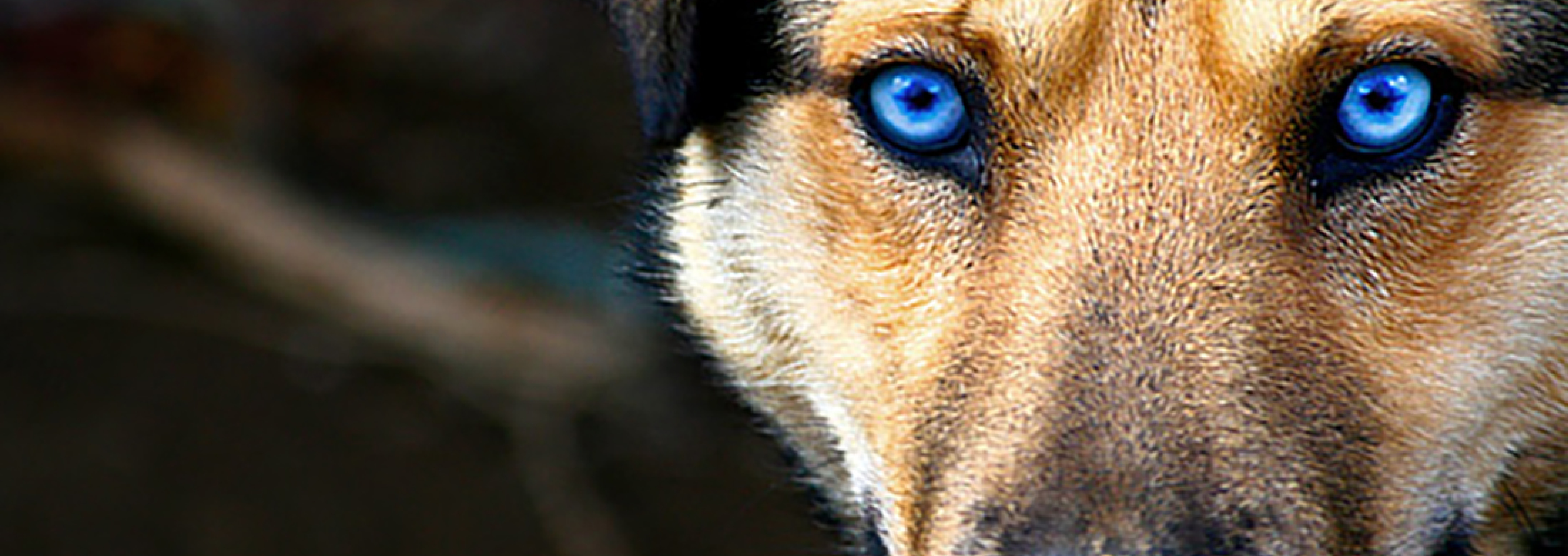 Blue Puppy Food >> The Evolution of Pet Ownership | PEDIGREE®