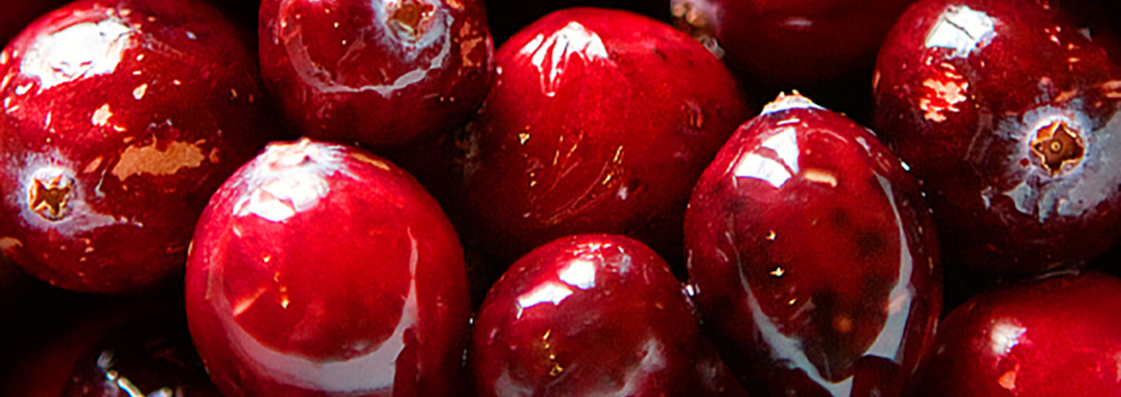Do Cranberries Cure Canine Troubles