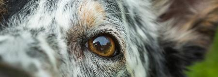 close up on dog's face and eyes