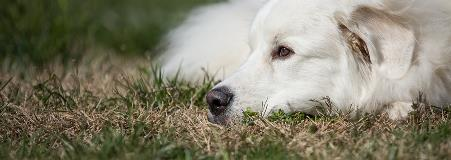 dog lying on the grass