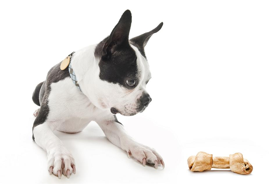 dog sitting next to rawhide dog treat