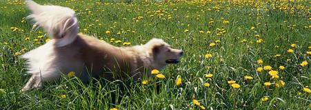 dog running for exercise in a field
