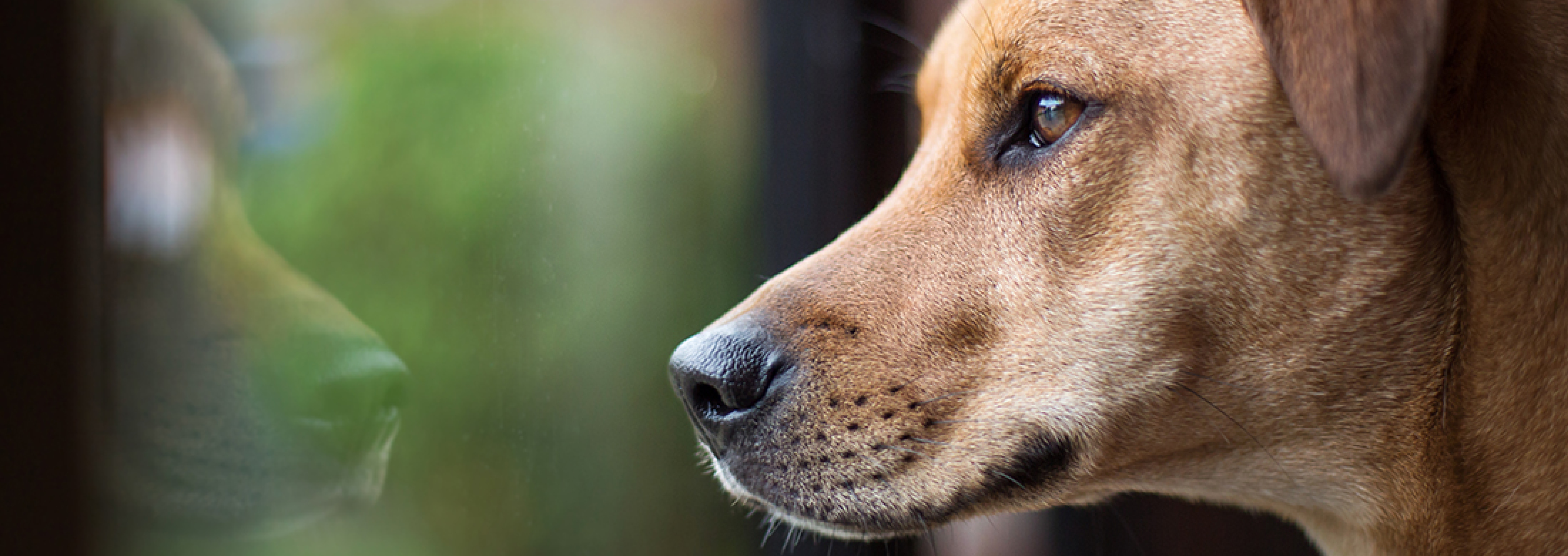signs of a grieving dog