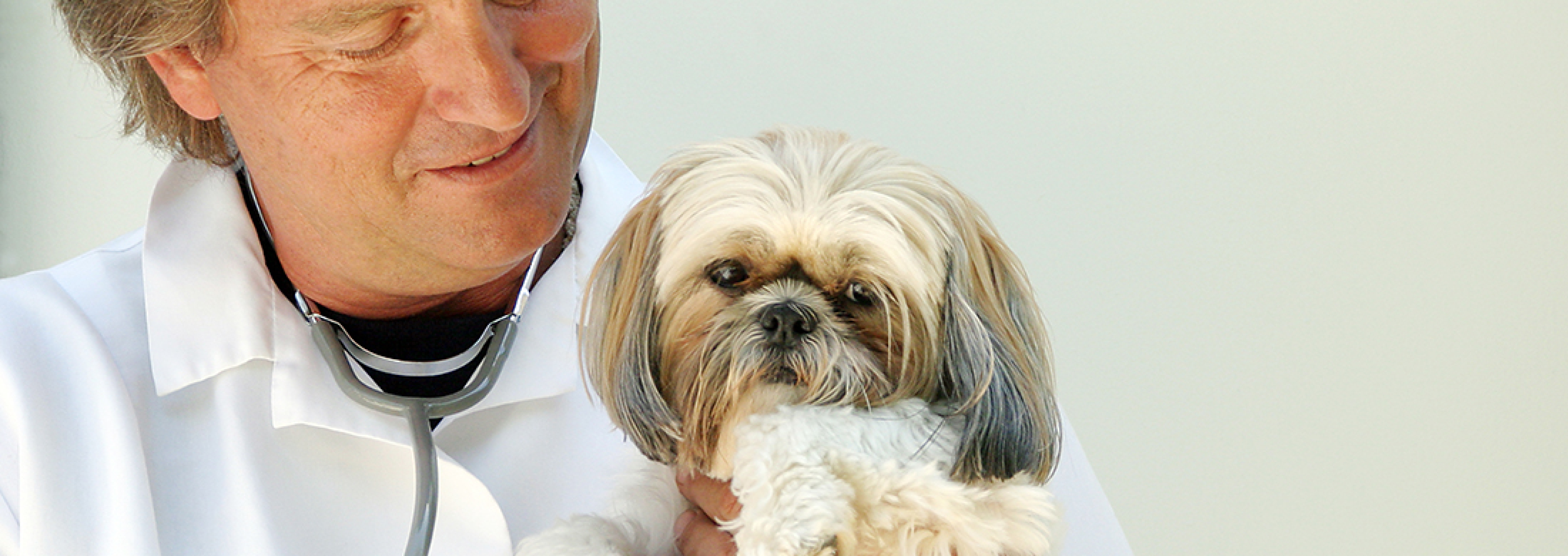 A Few Shih Tsu Health Concerns