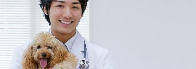 smiling veterinarian holding toy poodle