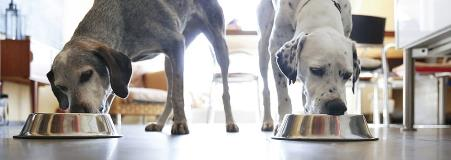 Two dogs eat from bowl