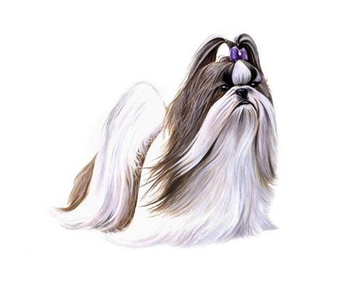 Shih Tzu Pedigree
