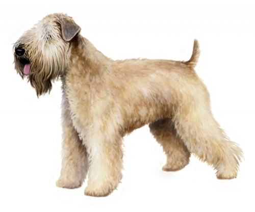 Soft Coated Wheaten Terrier Pedigree