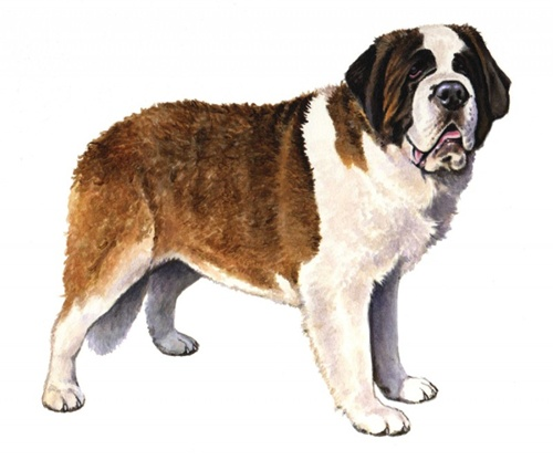 Saint Bernard Pedigree